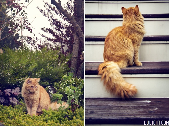 Cat photography tips, lulight