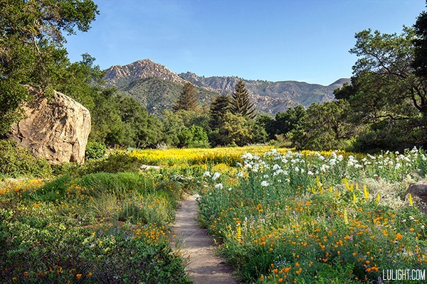 Santa Barbara Botanic Garden Meadow
