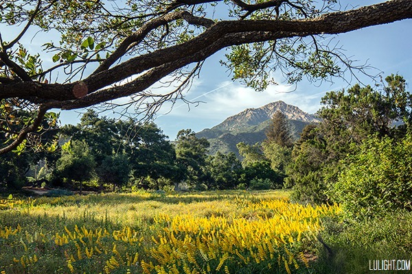 Santa Barbara botanic garden in full bloom