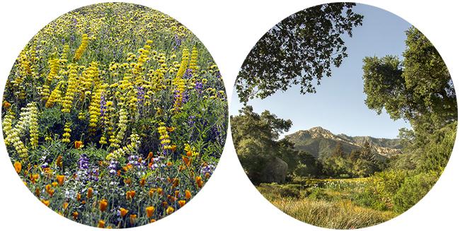 santa barbara botanic garden blog