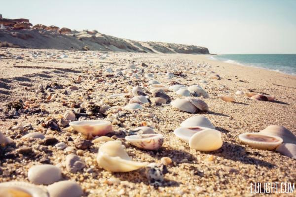 shells on beach, lulightcom, lucia ferreira litowtschenko