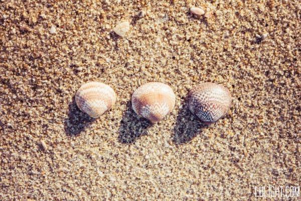 shells, lulightcom, lucia ferreira litowtschenko